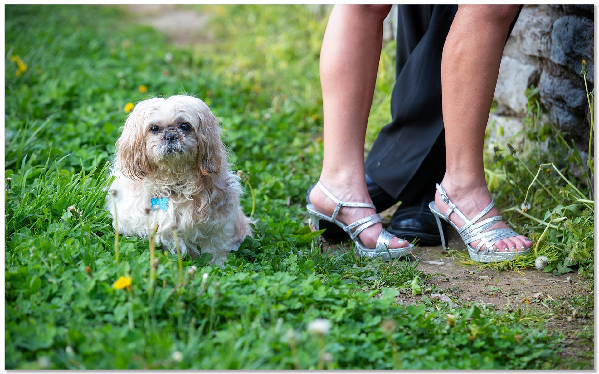 Eden Park Cincinnati engagement dog