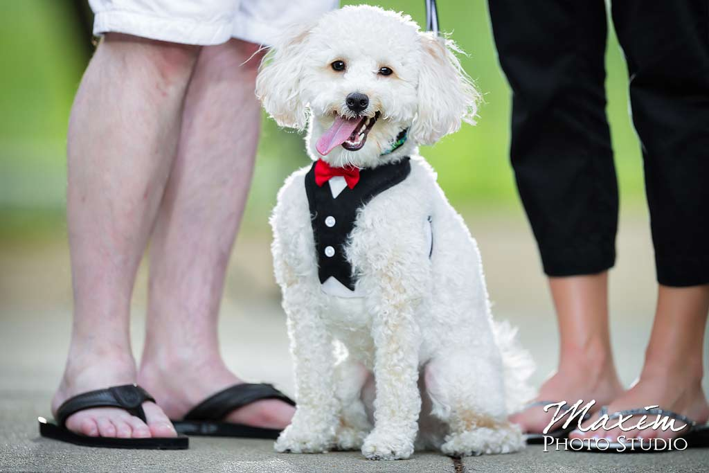 dog tuxedo eden park engagement photo