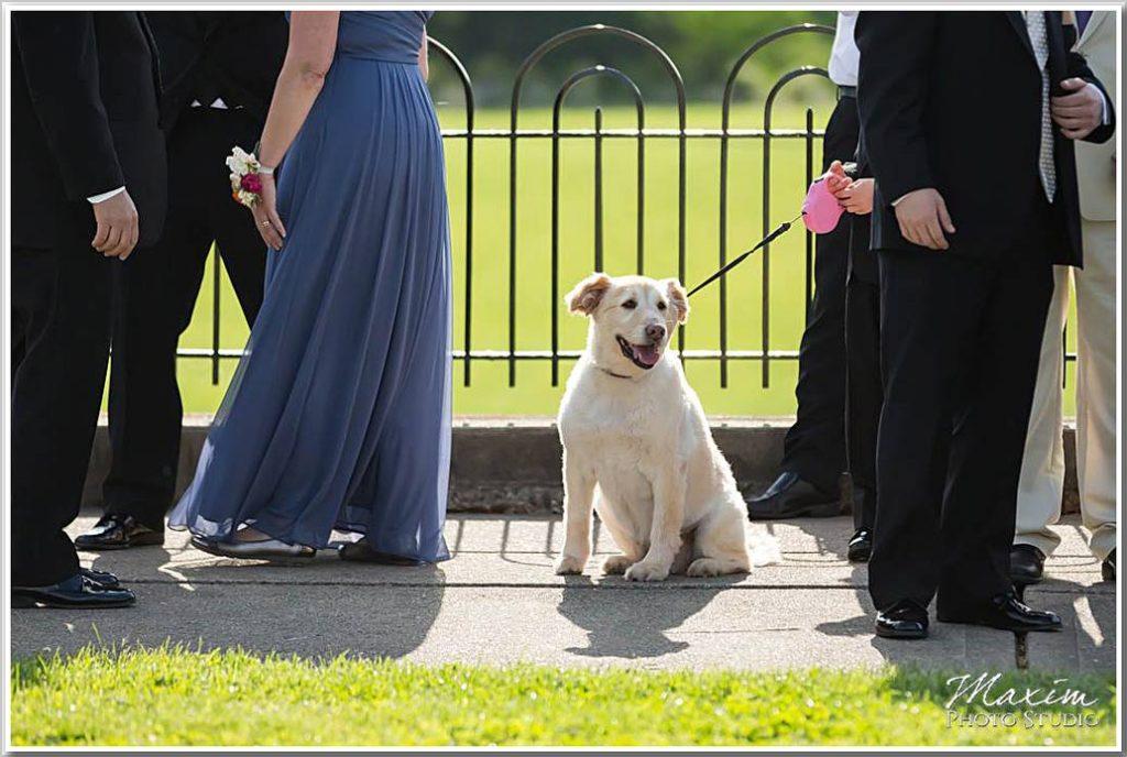 Ault Park Cincinnati Ceremony dog