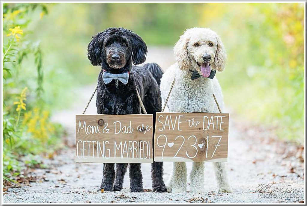 Save the Date dogs sign